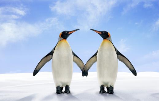 Pinguins - imagem: Digital Zoo/Digital Vision